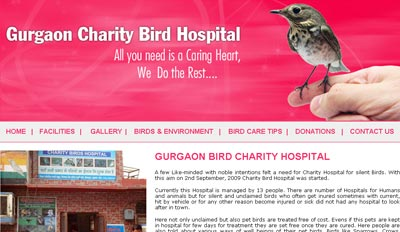 Website for Bird Charity Hospital in Gurgaon